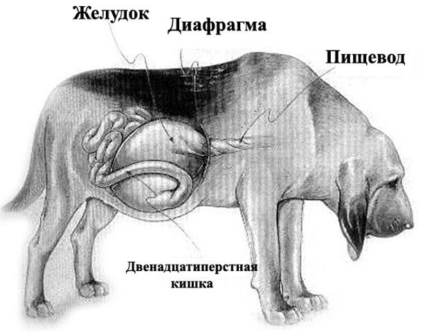 как выглядит болезнь
