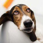 Память у собак — какая она?