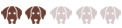 Собака Гампр армянский волкодав - характеристика породы