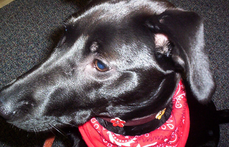 Аллергия на ушах у собаки
