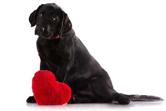 Собака с больным сердцем