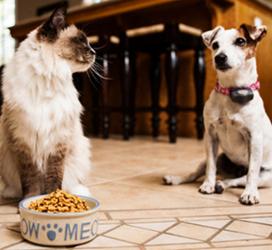 Собака смотрит за кошкой