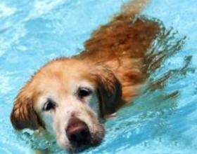 Что делать если собаке в уши попала вода