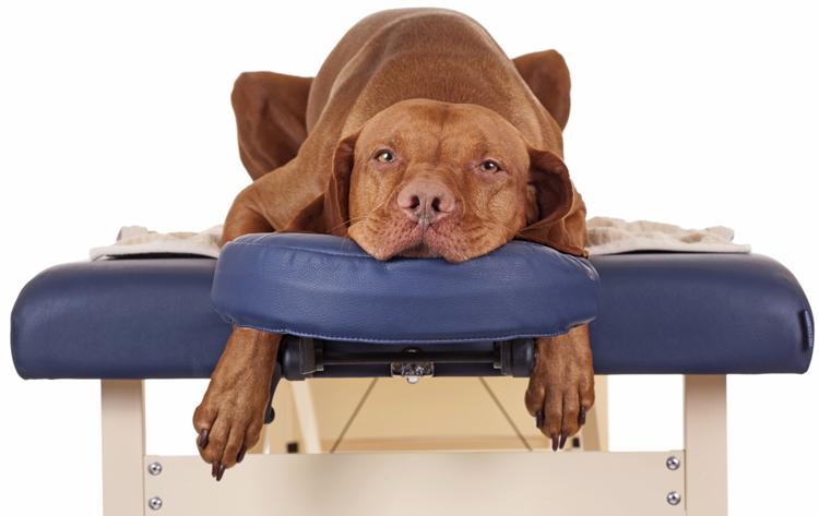 Собака с артритом у ветеринара