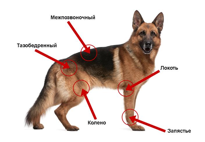 Места артрита у собак