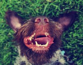 У собаки пахнет тухлятиной изо рта