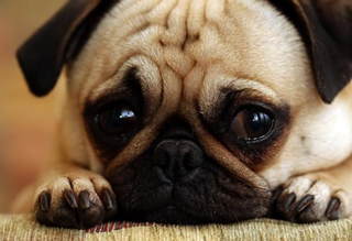 Собака при болезни