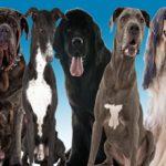 Клички для собак мальчиков и девочек крупных пород