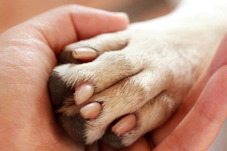 Опухшая лапа собаки