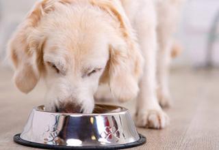 Когда нужно кормить собаку