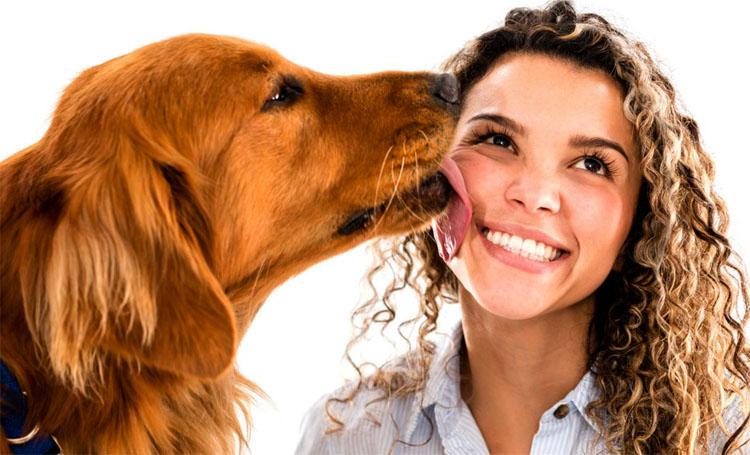 Собака лижет лицо человека