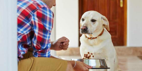 Хозяин дает сухой корм собаке