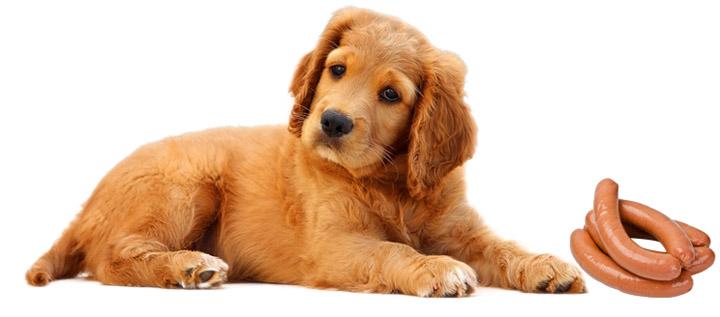 Собака с сосисками