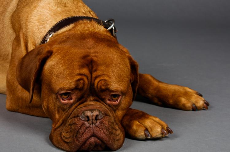 Вялость у собаки