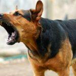 Как отучить свою собаку лаять на всех подряд