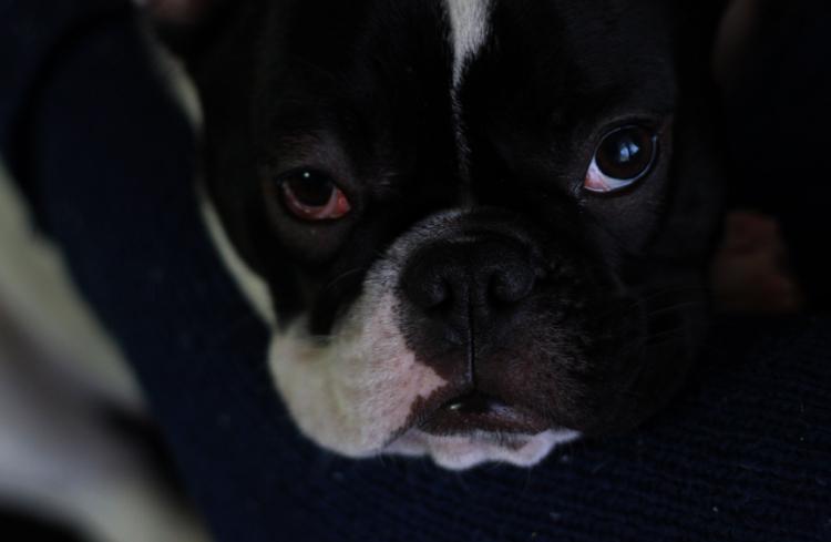 У собаки проблемы с глазом