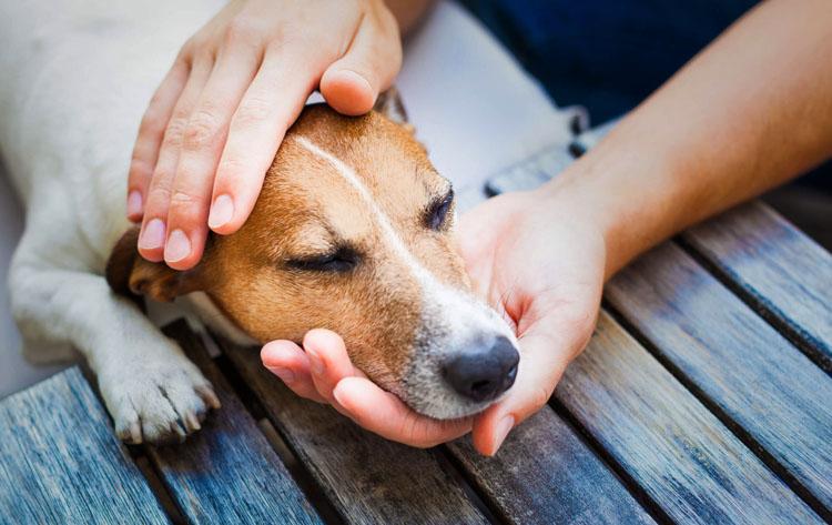 Собака с коликами