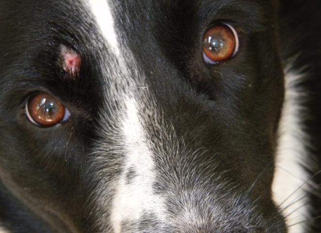 Лишай на лице у собаки