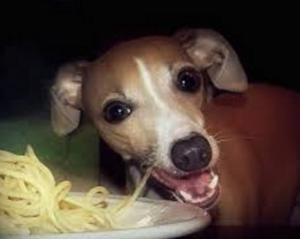 Собака кушает макароны