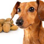 Орехи для собак: можно ли давать и какие давать