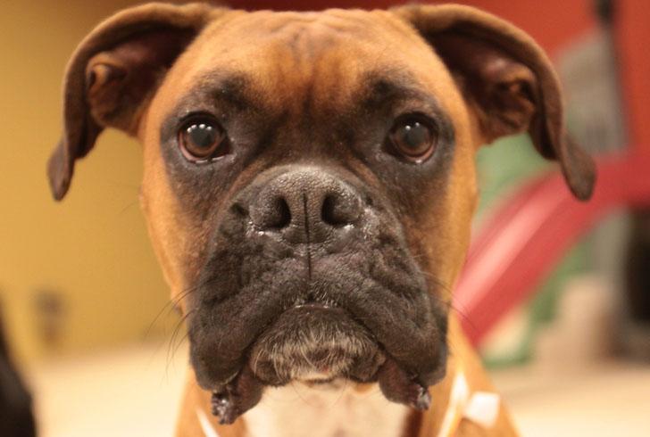 Лицо собаки