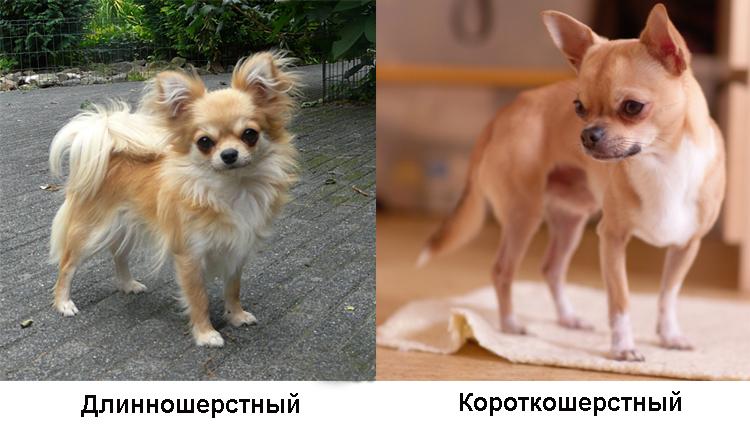 Виды собаки
