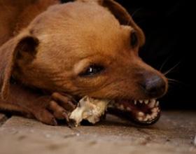 Какие кости можно давать собакам, а какие нет