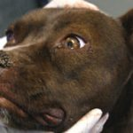 Чумка у собак — симптомы и лечение заболевания