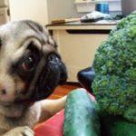 Можно ли давать брокколи собакам?