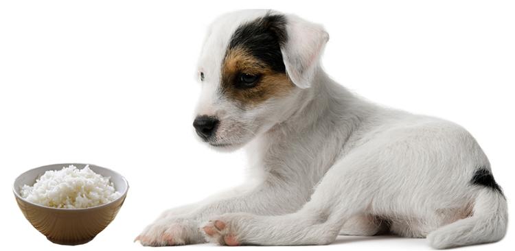 Собака и рисовая каша