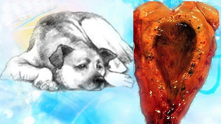 Собака с холециститом