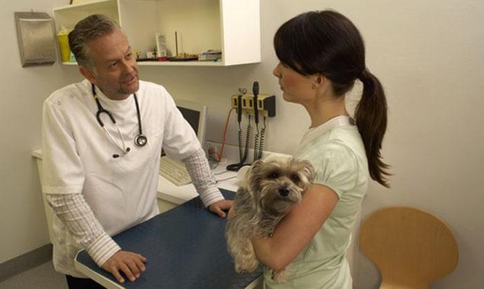 Больная собака у ветеринара