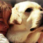 Лучшие породы собак для маленького ребенка — ТОП-10