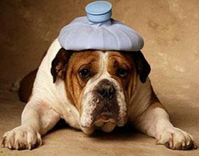 Отравление у собаки