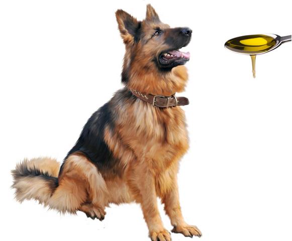 Рыбий жир для собаки