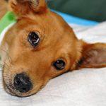 Ринотрахеит у собак — симптомы и лечение болезни
