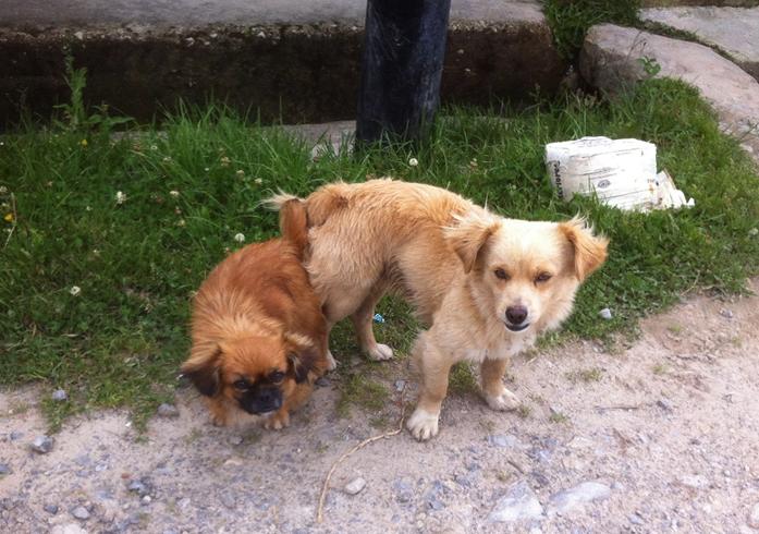 Собаки после спаривания