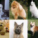 Варианты кличек для собак (мальчиков и девочек) маленьких пород