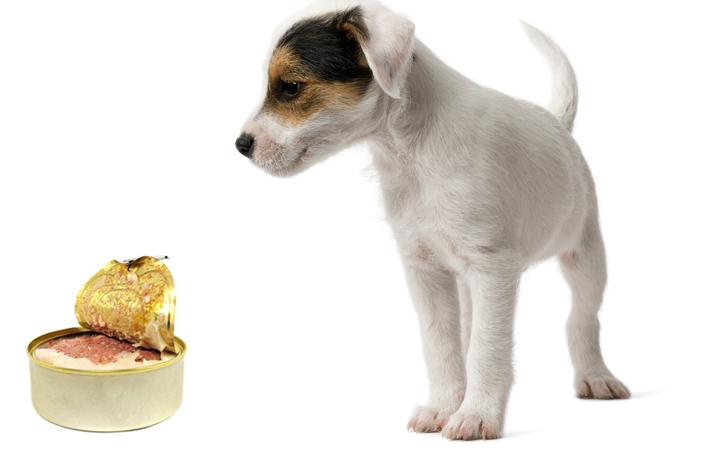 Собака и тушенка