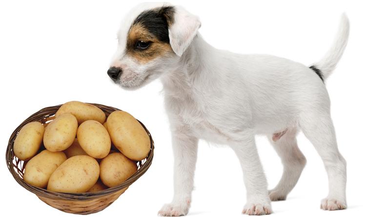 Картошка для собаки