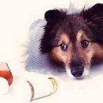 Антибиотики для собак: виды и какие можно давать