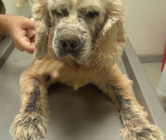 Собака на диагностике