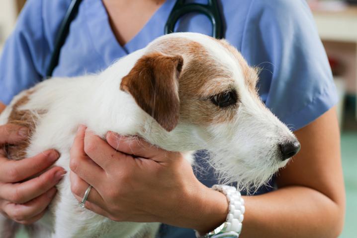Собачка у ветеринара