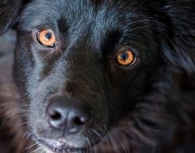 У собаки пожелтели белки глаз