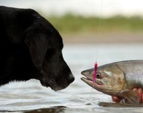 Рыба собакам