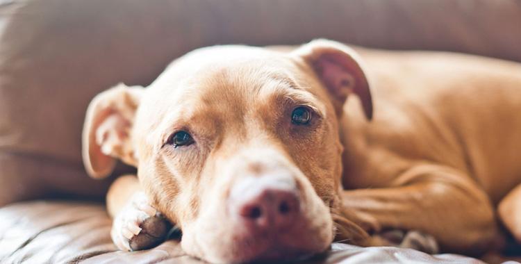 Собака тяжело болеет