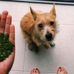 Можно ли собакам давать петрушку и укроп