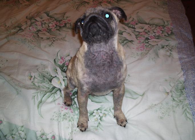 Демодекоз у пса