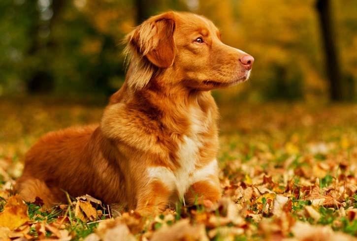 Тихая собака