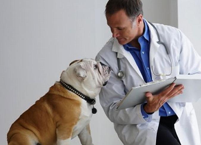 Собака с диабетом